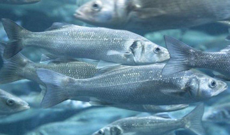 fondo peces web