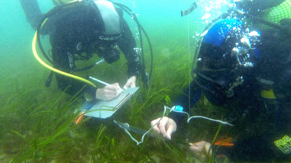 Taking measurements in a seagrass bed